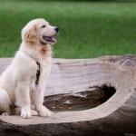 Sam Calendario 2013 - Fotografo de Cães