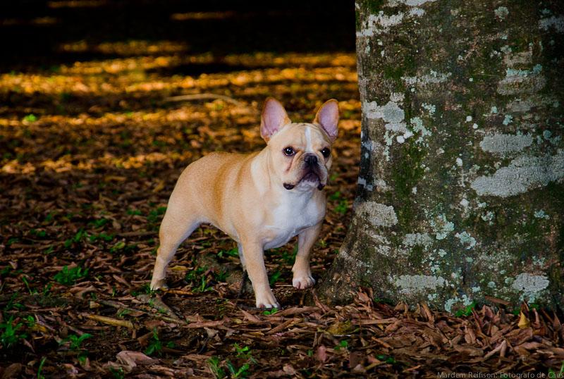 Pandora - Fotografo de Cães