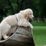 Sam - Fotografo de Cães