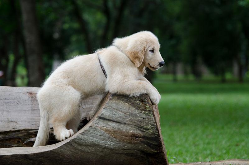 Cães e Gatos: É possível conviver?