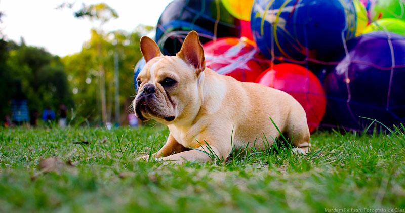 O cachorro deve comer quantas vezes por dia?
