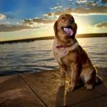 Luna - Fotografo de Cães