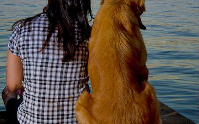 Cachorro sente ciúmes?