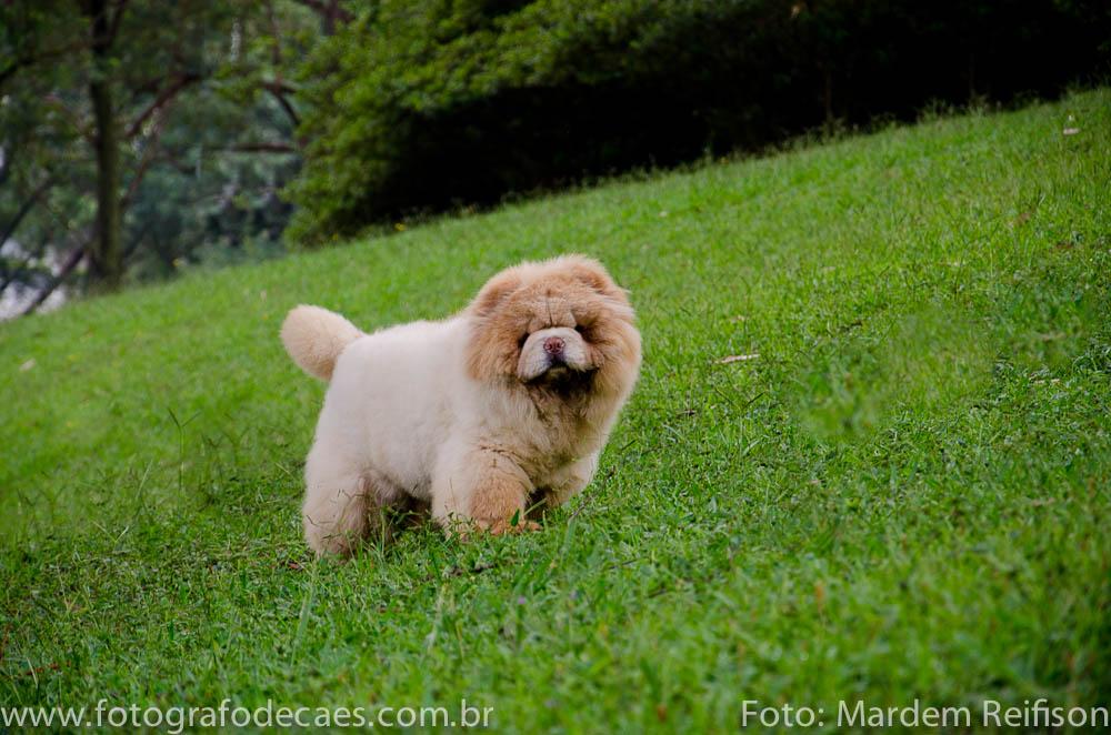 Como Gastar Energia de Cães Mais Agitados