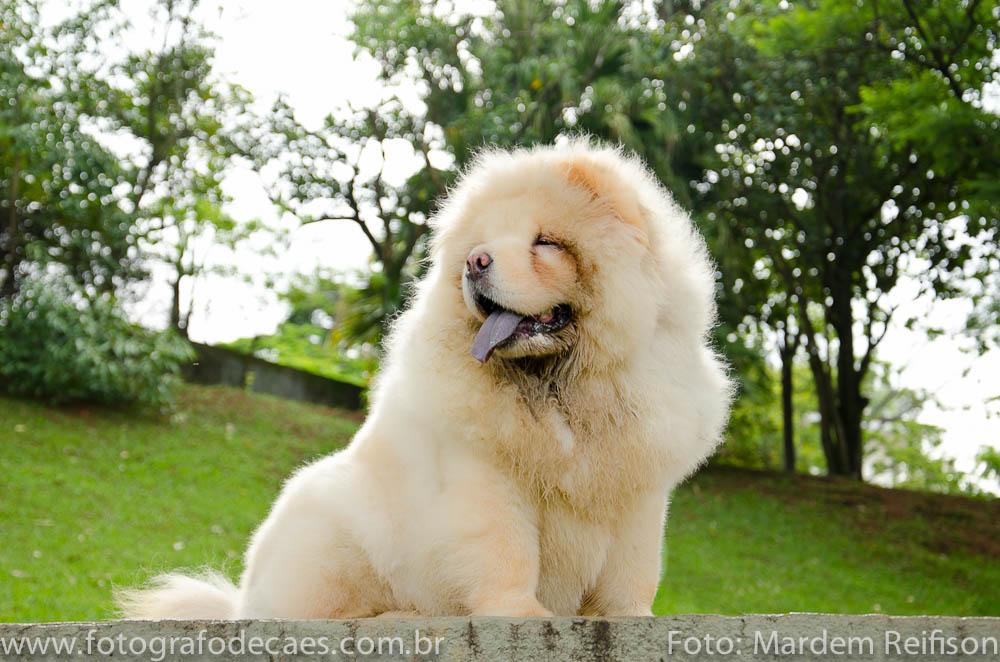 PET-Chow-chow-Rodrigo-18-01-14-22