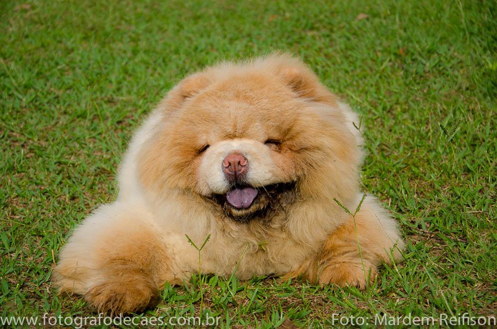 PET-Chow-chow-Rodrigo-18-01-14-32