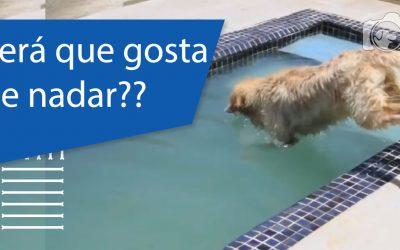 Natação para cachorros – Um ótimo exercício