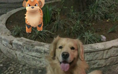 Leve seu cachorro para caçar pokémon