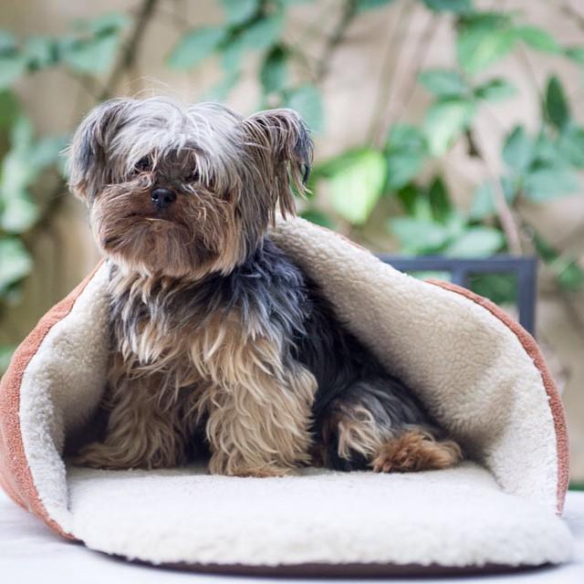 Cachorros pequenos: conheça 10 raças