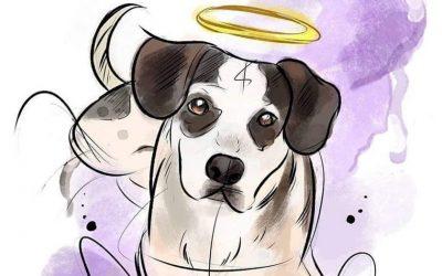 Cachorro morto no Carrefour